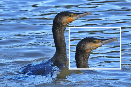 continental Cormorant Stover CP 4th March 2020 Nigel Street