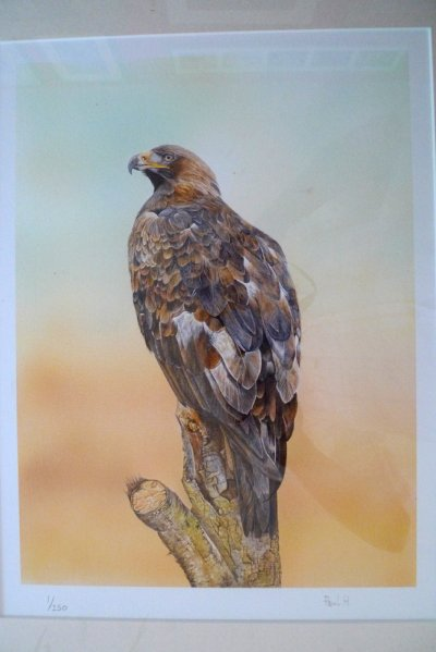 Photo of Golden Eagle Print