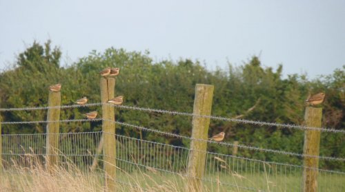 There's a Whinchat in this pic - can you spot it?