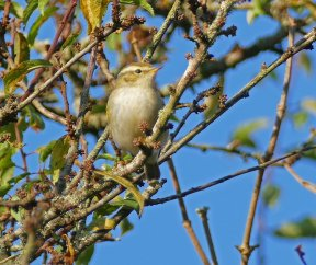 YBW Clennon Lakes 021116 ML