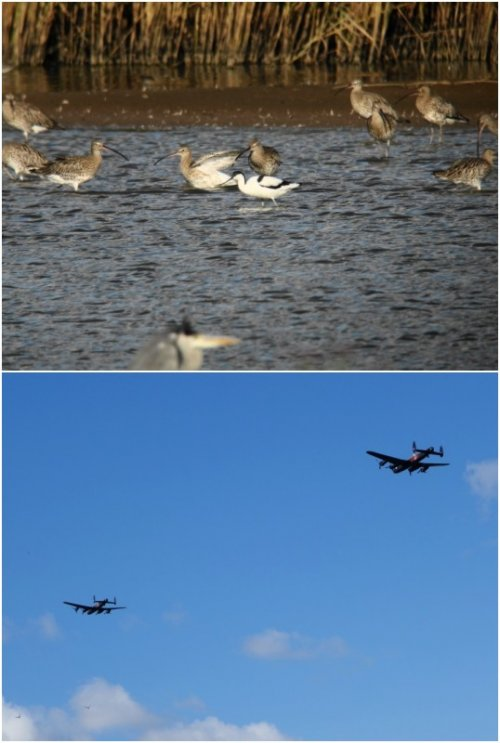 Avocet (Top) & Lancaster Bombers (Bottom)