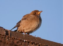 Rosy Starling on The Boathouse