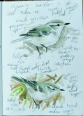 Hume's Warbler field notes Berry Hd 22 Nov 2018 ML