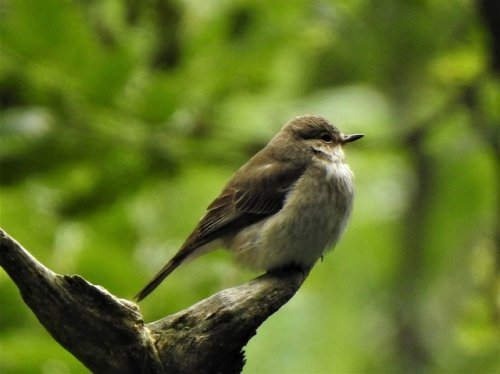 Sedge Warbler, Egyptian Goose, Spotted Flycatcher