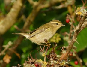YBW Berry Hd 17 Oct ML meadow
