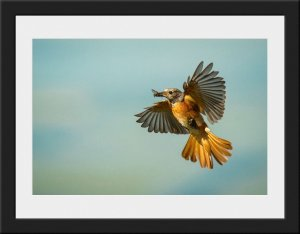 Photo 24 - Redstart by Andy Brown