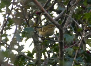 YBW Berry Hd 17 Oct 2016 Quarry