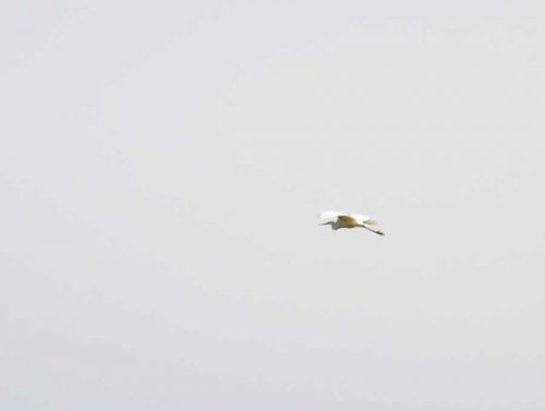 Record pic of GWE dropping in at 8:30am.