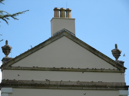 House martins at Saltram