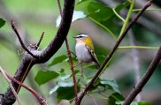 always nice to see Firecrests