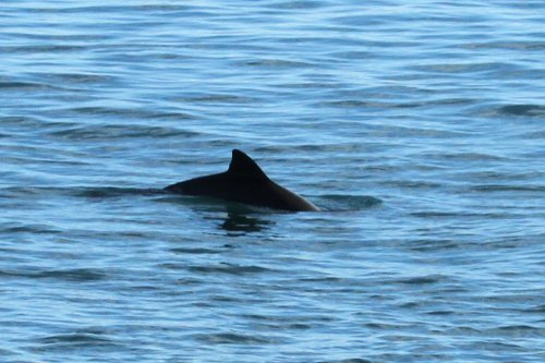 Porpoise, Berry Head