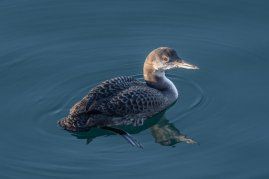 Solitary GND on a sunny morning