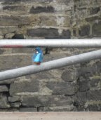 Male kingfisher on scaffolding