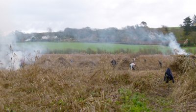 Reed Cutting South MIlton Ley 11.1.15 J Avon