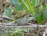 YBW Clennon Stream 130117ML